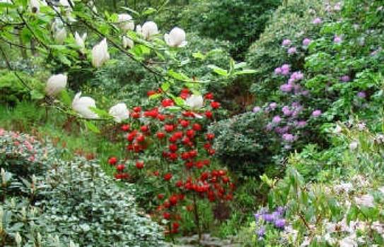 Dunge Valley Gardens