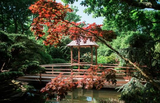 Japanese Garden Cornwall