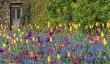 aberglasney-tulip-display.jpg