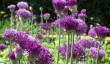 arundel_castle_garden.jpg