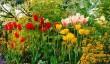 barnsdale-garden.jpg