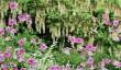 barrington-court-gardens.jpg
