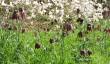 batsford-arboretum-cotswolds.jpg