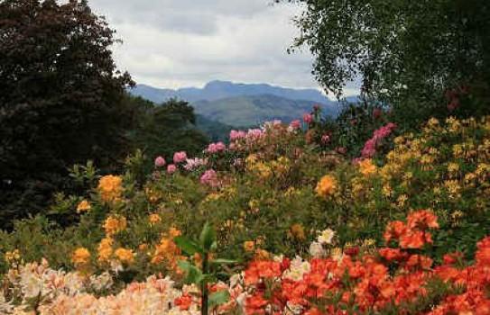 Brockhole Garden