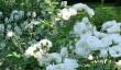 buscot-park-gardens-4.jpg