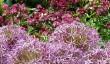 buscot_flowers.jpg