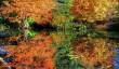 cambridgebotanic-autumn.jpg