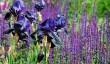 chelsea-garden-show.jpg