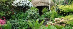 Chelsea Flower Show - looking back at Chris Beardshaw's great Furzey Garden