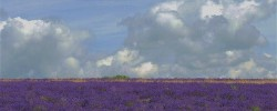 Where to see lavender fields