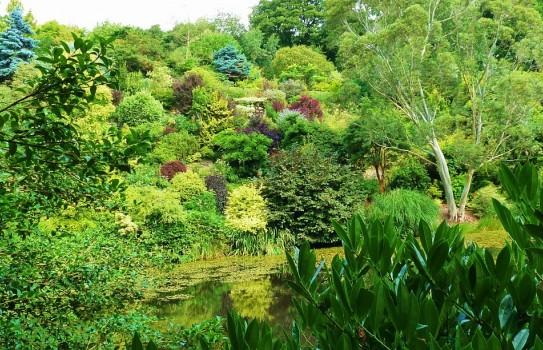 The Dingle Garden