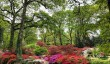 exbury-azaleas.jpg
