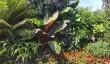 gardens-devon.jpg