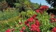 gardens-in-shropshire.jpg
