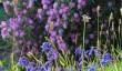 glendurgan-gardens.jpg