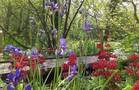 Great British Gardens - Fairhaven Woodland Garden