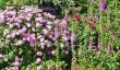 hanham-court-gardens.jpg