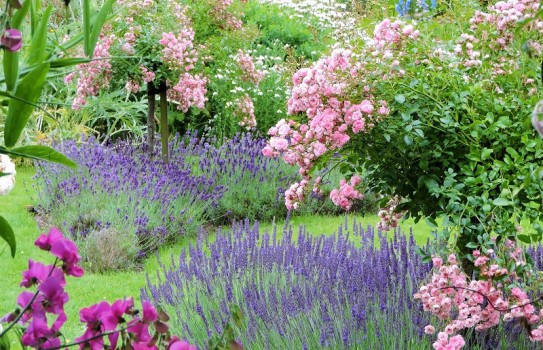 Hergest Croft Gardens in Herefordshire