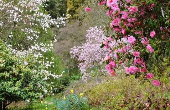 High Beeches Garden