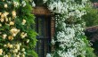 hindringham-garden.jpg