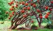 inverewe_gardens.jpg