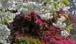 lukesland-garden.jpg