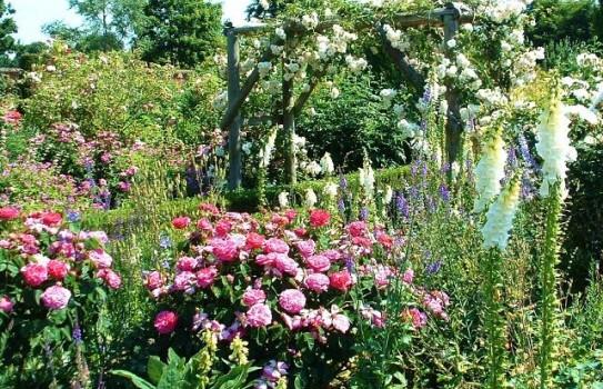Mottisfont Abbey Rose Garden