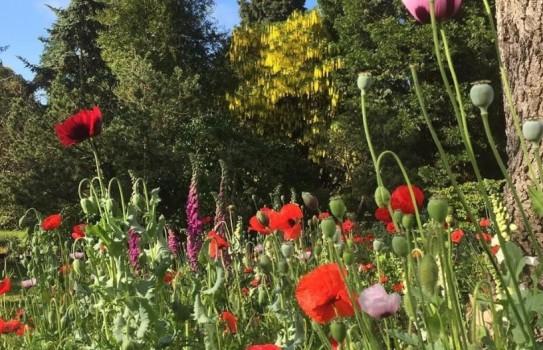 Myddleton House Garden
