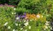 nymans-flowers.jpg