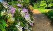 nymans-garden-sussex.jpg