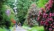 pencarrow-house-garden.jpg