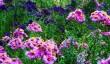 picton-garden.jpg