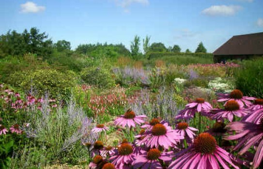 Ryton Organic Garden