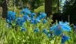 scone-garden.jpg