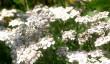sussex-garden.jpg