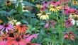 swindon-garden.jpg