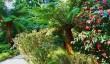 trengwainton-gardens.jpg