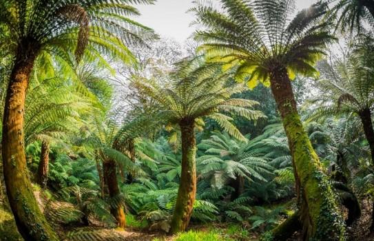 Trewidden Garden