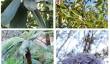trewithen-house-garden.jpg