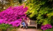 wakehurst-spring.jpg