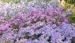 waterperry-garden-7.jpg